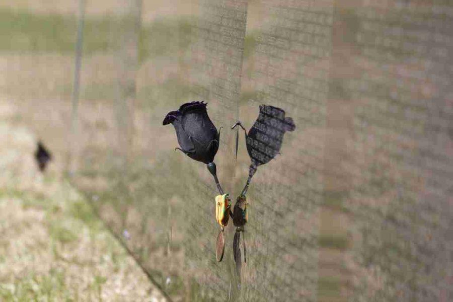 Vietnam Memorial Wall comes to Orlando