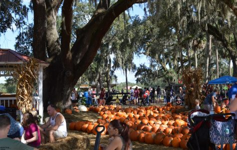 Enjoy Local Pumpkin Patch Hosted by Equestrian Training Academy