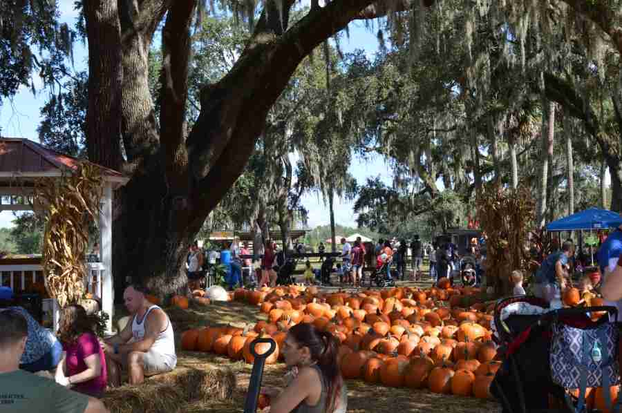 Enjoy Local Pumpkin Patch Hosted by Equestrian Training Academy