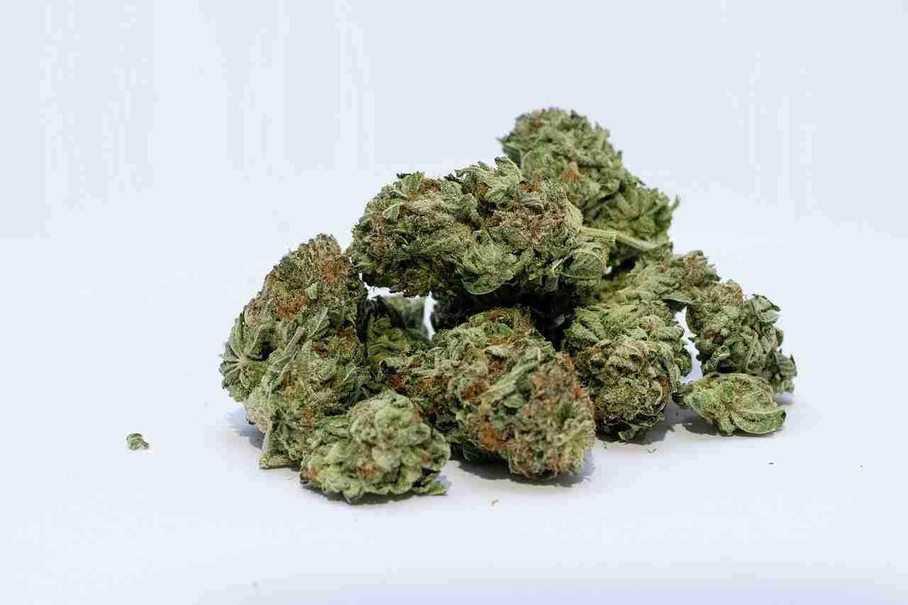 Florida Legislature Rejects Marijuana Legalization Bill